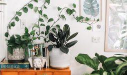 Podłoża organiczne do roślin - rodzaje